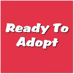 Ready to Adopt
